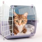 Akcesoria podróżne dla kota